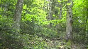 Zgomot apocaliptic într-o pădure