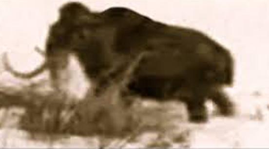 Un mamut filmat în Rusia