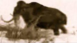 Un mamut filmat