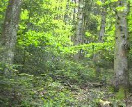 Zgomot apocaliptic într-o pădure din Franţa